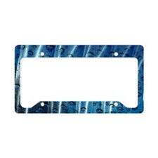 11Auerbach License Plate Holder