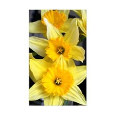 Daffs in a line Decal