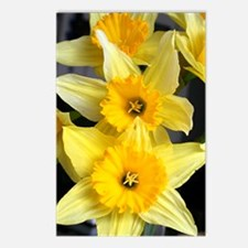 Daffs in a line Postcards (Package of 8)