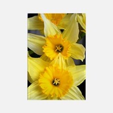 Daffs in a line Rectangle Magnet