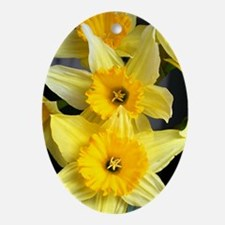 Daffs in a line Oval Ornament