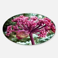 Purple Angelica Decal