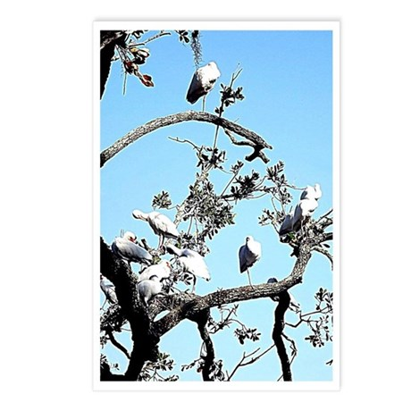 blue birds Postcards (Package of 8)