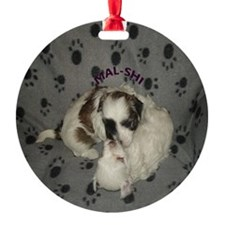 Mal-Shi puppies playing Ornament