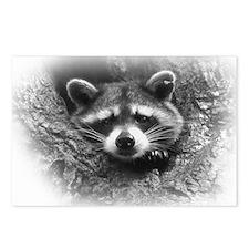 Raccoon in Tree Postcards (Package of 8)