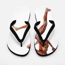 Female muscles, artwork Flip Flops