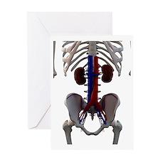 Healthy kidneys, artwork Greeting Card