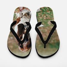 87455551 Flip Flops