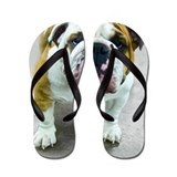 English bulldog Flip Flops