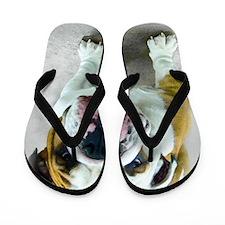 Bulldog Flip Flops