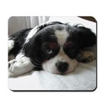Cocker Spaniel Puppy Face Mousepad