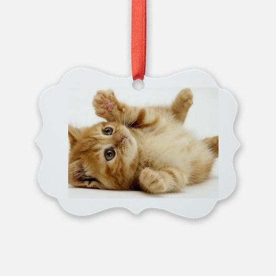 Orange kitten Ornament