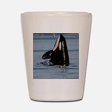 Spy Hopping Orca Shot Glass