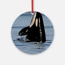 Spy Hopping Orca Round Ornament