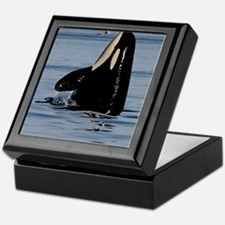 Spy Hopping Orca Keepsake Box