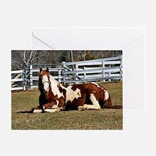 My Paint Horse Sunbathing Greeting Card