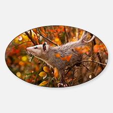 Autumn Opossum Decal