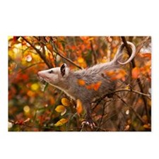 Autumn Opossum Postcards (Package of 8)