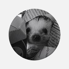 """Nosey Hedgehog 3.5"""" Button"""