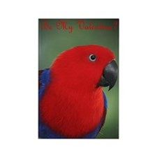 Eclectus Parrot Valentine Rectangle Magnet
