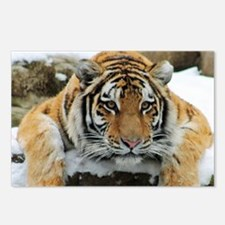 Tiger Watch Postcards (Package of 8)