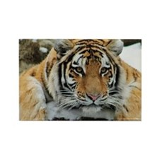 Tiger Watch Rectangle Magnet