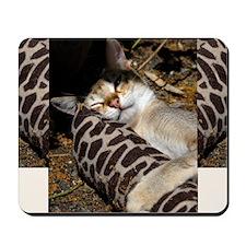 Singapura Cat Mousepad
