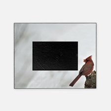 Male Red Cardinal Picture Frame
