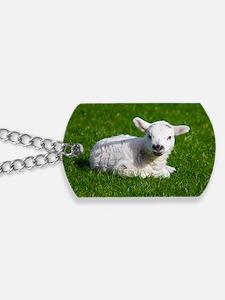 Baby lamb Dog Tags