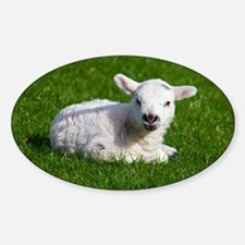 Baby lamb Sticker (Oval)