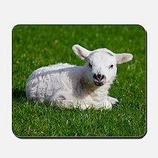 Baby lamb Mousepad