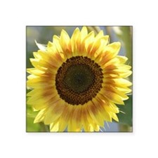 "Yellow Sunflower Square Sticker 3"" x 3"""