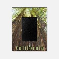 California Redwoods Picture Frame
