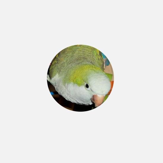 Playful Parrot Mini Button