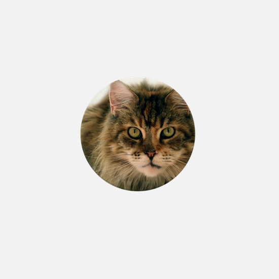 Maine Coon Mini Button