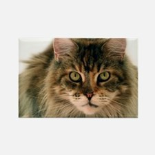 Maine Coon Rectangle Magnet