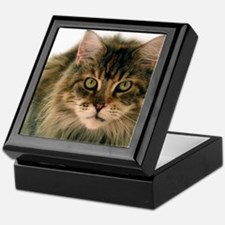Maine Coon Keepsake Box