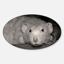 Cheerio Sticker (Oval)