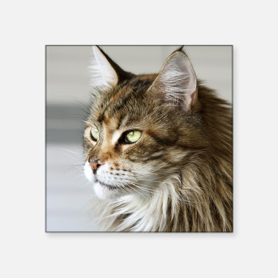 "Maine Coon Square Sticker 3"" x 3"""