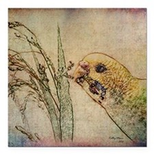 "Parakeet 005 - With Grai Square Car Magnet 3"" x 3"""