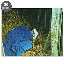 sleeping owl  in barn Puzzle