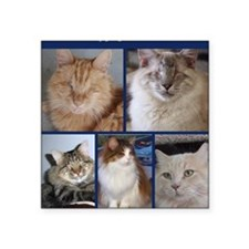 "Fluffy Gang of BCR Square Sticker 3"" x 3"""