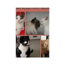 Group of Kitties 2 Rectangle Magnet