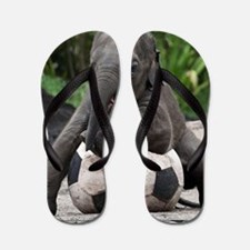 Elephant Soccer Flip Flops
