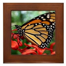 Butterly In Garden Framed Tile