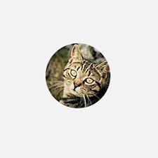 Domestic Cat Mini Button