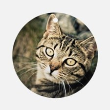 Domestic Cat Round Ornament