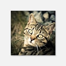"""Domestic Cat Square Sticker 3"""" x 3"""""""