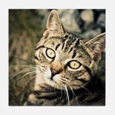 Domestic Cat Tile Coaster