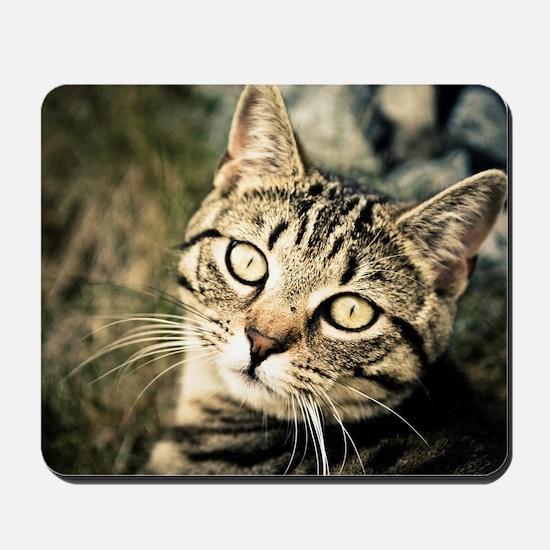 Domestic Cat Mousepad